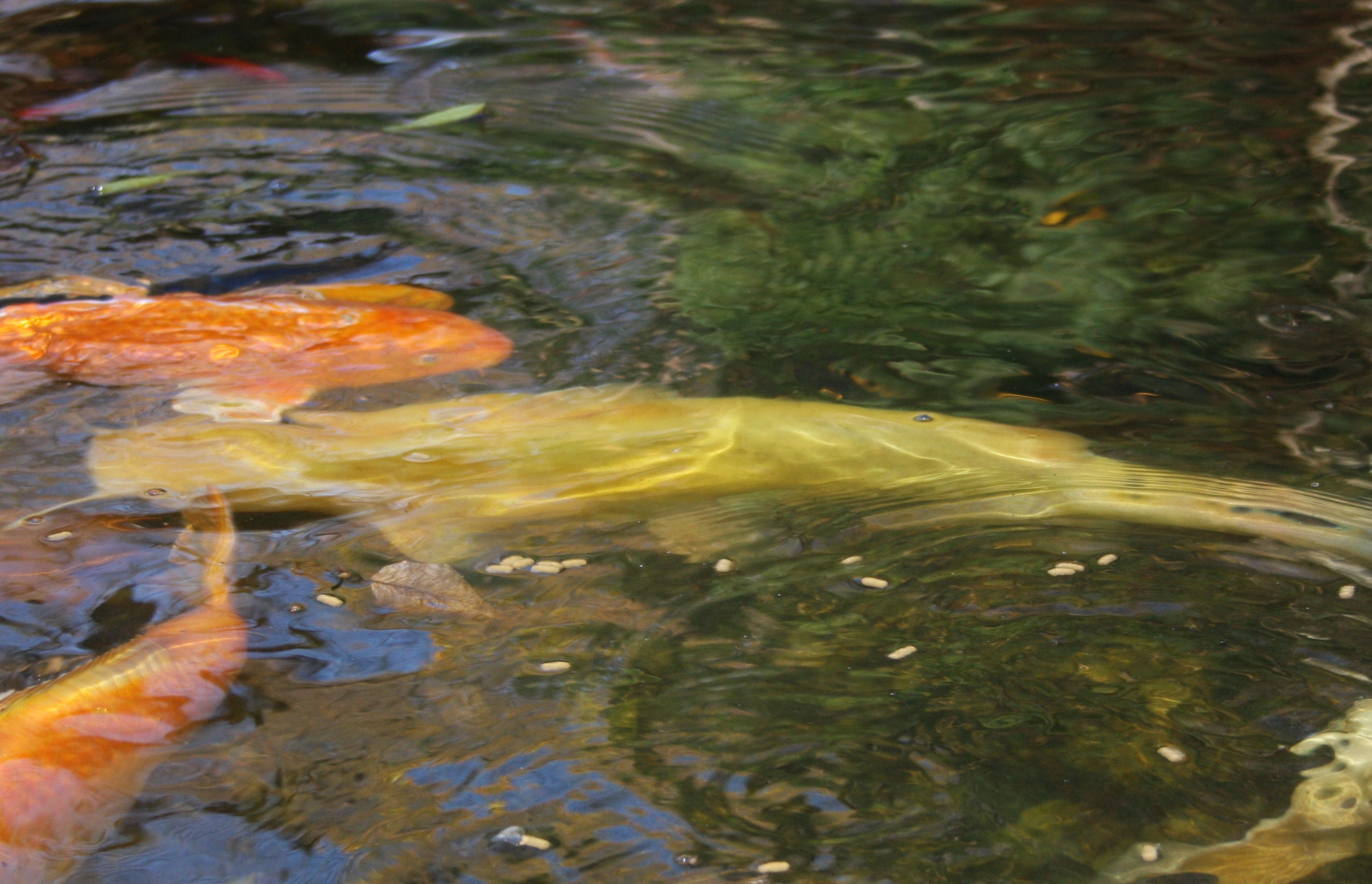 Unique Garden Ponds and Waterfalls « All About Koi Ponds