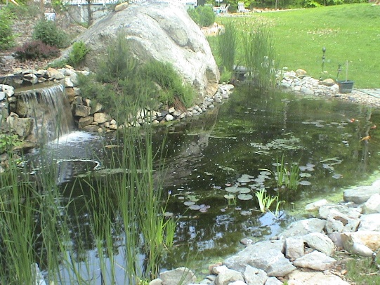 fish pond waterfalls how to build